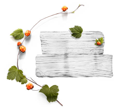 barnangen_com_swedish_inspired_ingredients_cloudberry_480x430